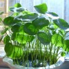 المناظر الطبيعية وتصميم المصنع و النبات المحفوظ بوعاء فن القش العشب القش الحرف اليدوية تجهيز رائعة غ