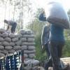 ارتفاع المورد نوعية من المنتجات الزراعية المعالجة سعر تنازلات