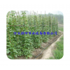 Hebei water saving irrigation with drip irrigation belt with direct selling vegetable greenhouse dri