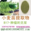 Wheat grass extract out run, Chenzhou 10:1 biological products