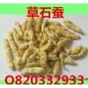 الجملة الصينية الأدوية العشبية و shican شاو