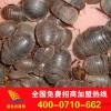 Wholesale of Chinese herbal medicines herbal medicinal herbs ' soil ground beetle