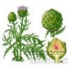 Manufacturers direct from stock natural artichoke 10:1 artichoke extract pure plant extracts
