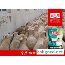 Fattening feed for Y640 captive sheep in Chek - Chek