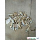 Shun De feed large quantity production feed feed dried fish factory direct sales details telephone